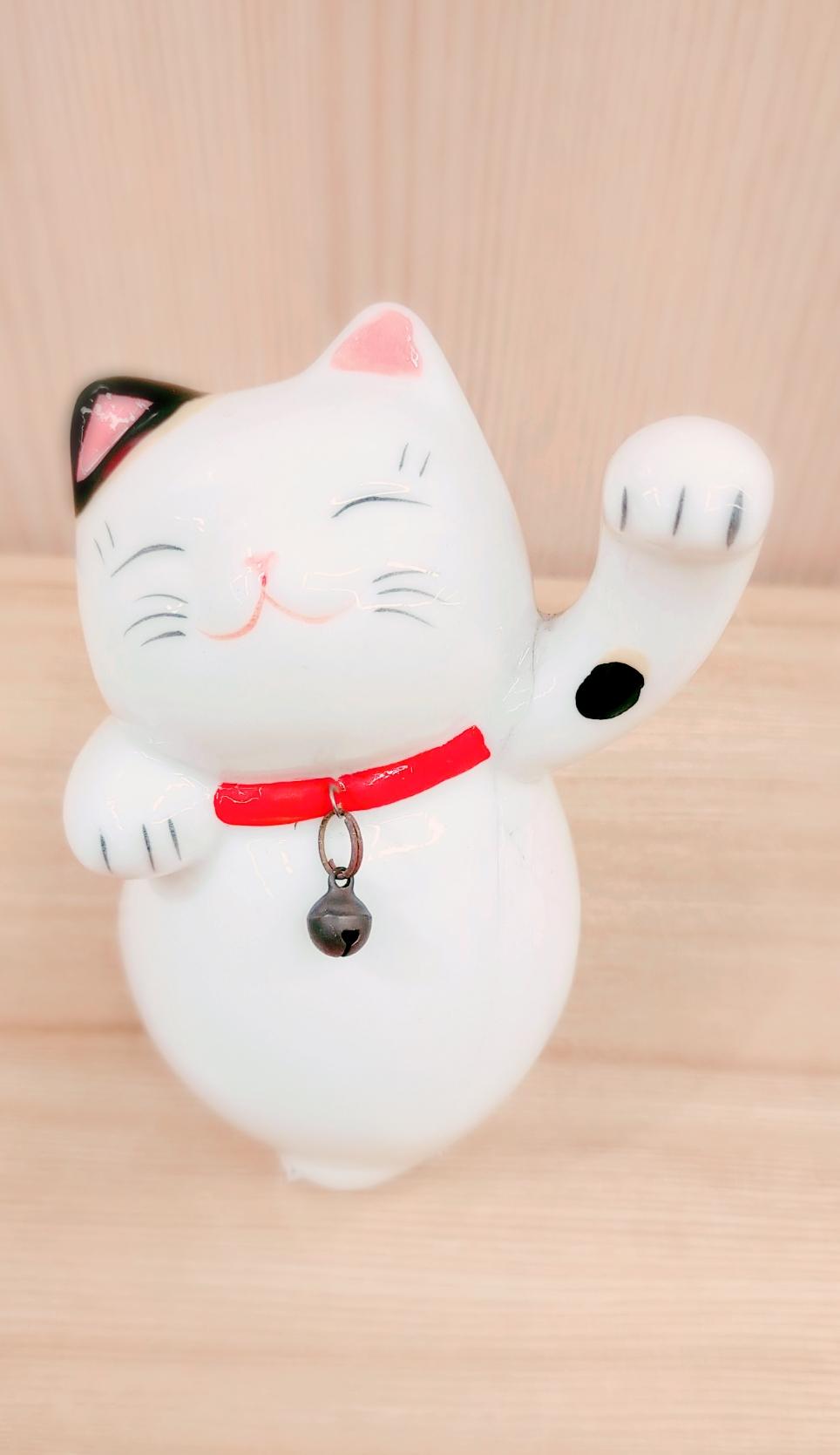 三善堂のかわいい猫
